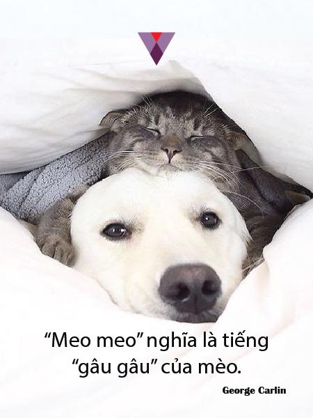 Humor quote-12